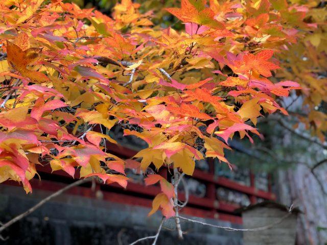 autumn photos