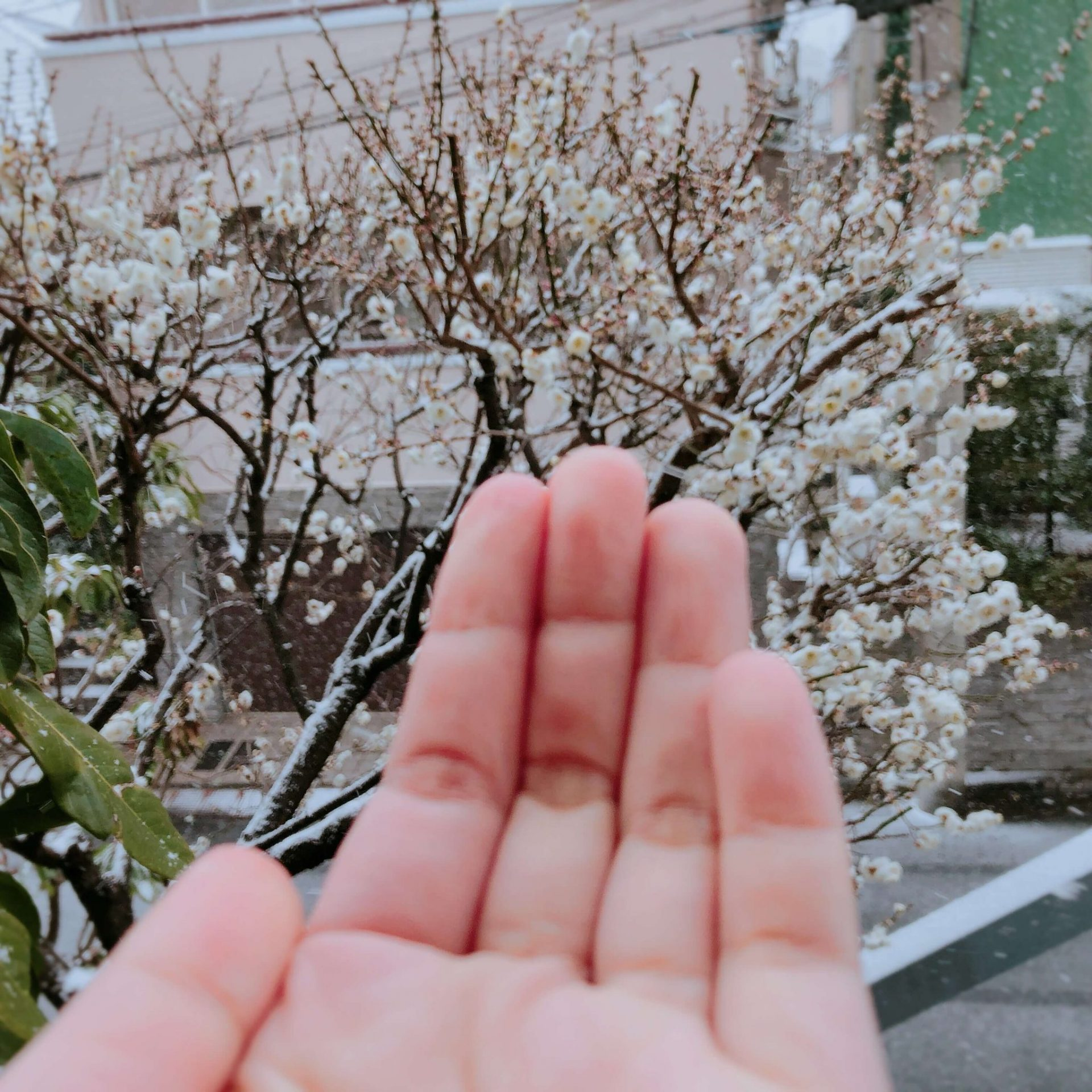 Hand And Snow
