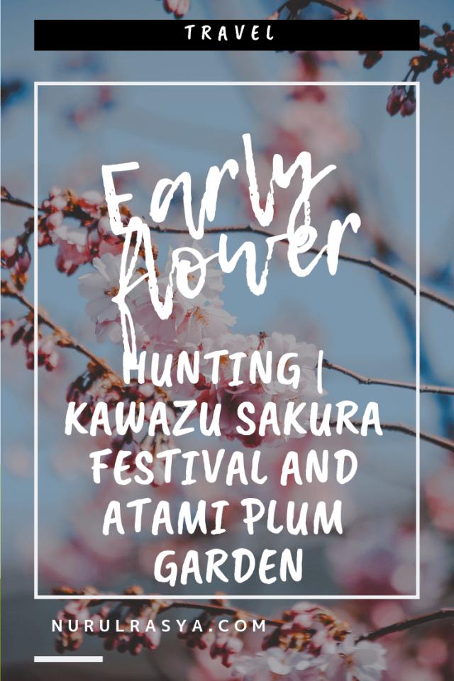 Early Flower Hunting | Kawazu Sakura Festival And Atami Plum Garden