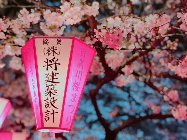 cherry blossoms galore; Meguro river